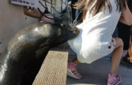 Sea Lion Attacks A Girl